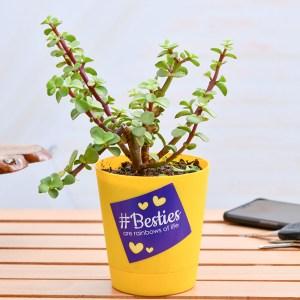 Luck Enhancer Jade Plant for your Bestie