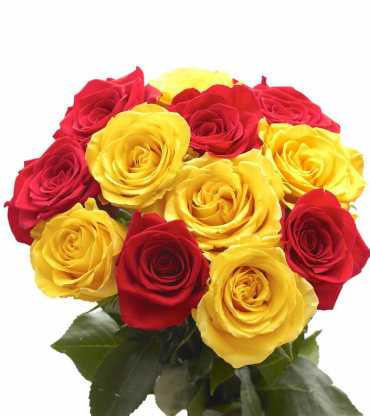 15-Red-Yellow-Roses-Bunch