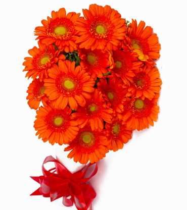 orange-geberas