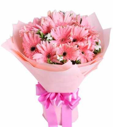 pink-gerberas