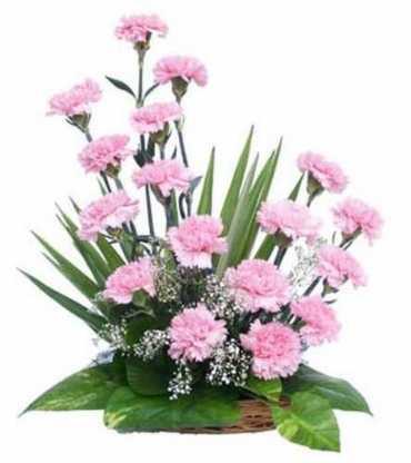 basket-arrangement-of-20-pink-carnations