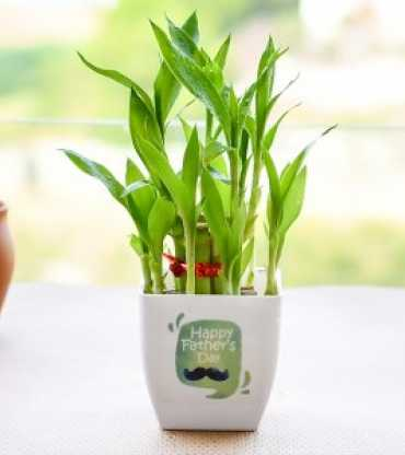 Surprise Your Loved One with 2 Layer Lucky Bamboo and Teddy