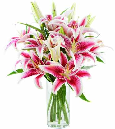 pink-lilly-vase