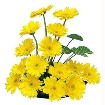 yellow-carnation-20arrangement